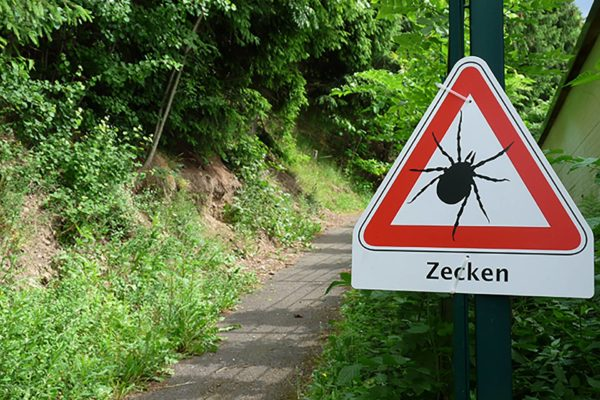 Zecken - © Dieter Schütz, Pixelio